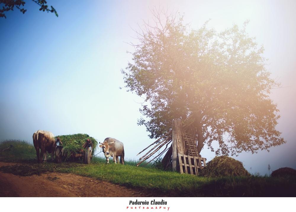 Peisaje - Paduroiu Claudiu Fotograf Brasov011