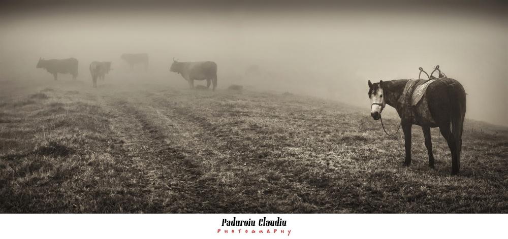 Peisaje - Paduroiu Claudiu Fotograf Brasov035