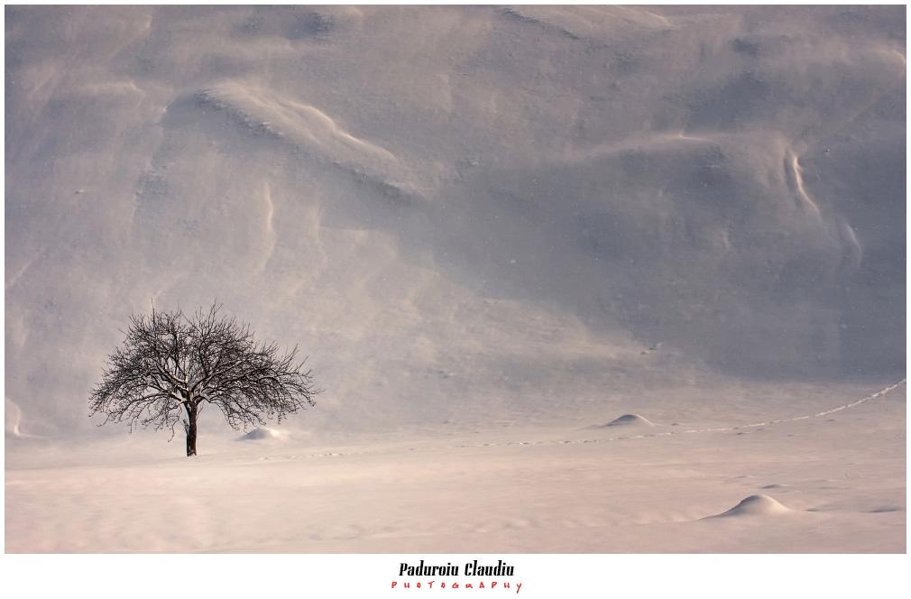 Peisaje - Paduroiu Claudiu052