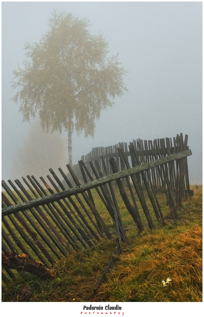 Peisaje - Paduroiu Claudiu073