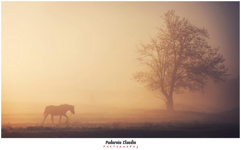 Peisaje - Paduroiu Claudiu097