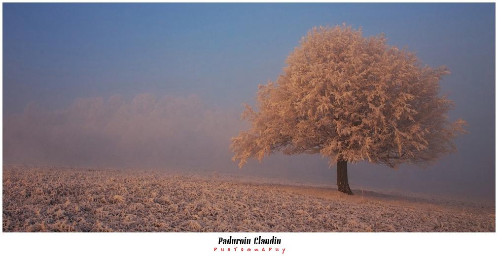 Peisaje - Paduroiu Claudiu101